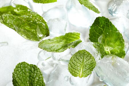 refrigerate: Leaves of mint in ice