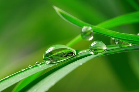 macro: drops with green grass Stock Photo