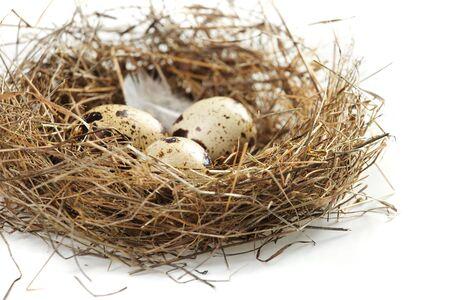 bird nest: egg in a real nest