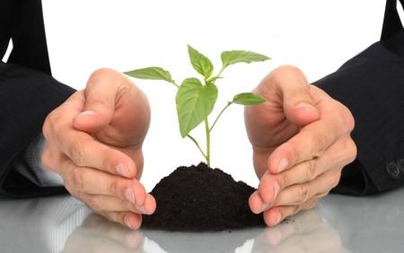 business men  a plant between hands  photo