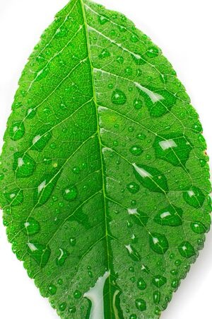refreshed: close-up beautiful leaf with drops Stock Photo