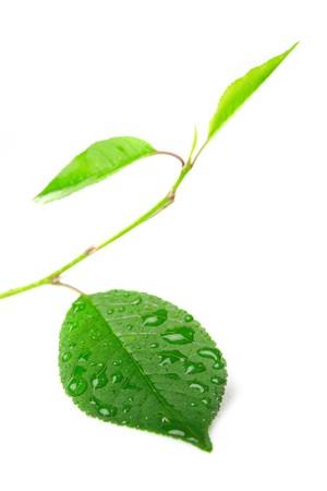 refreshed: close-up beautiful leaf  Stock Photo