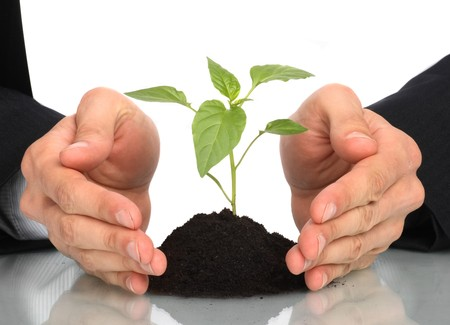 thrive: business men  a plant between hands  Stock Photo