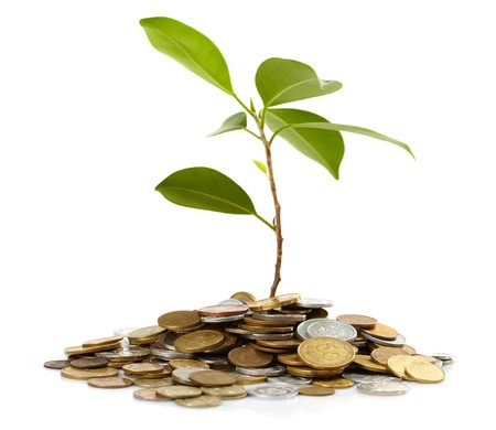 Coins sprout Stock Photo - 7415805
