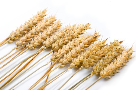 Grain ears Stock Photo - 7900827