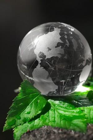 globe ecology  photo