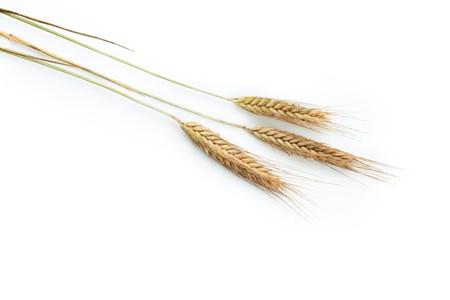 Grain ears Stock Photo - 8163470