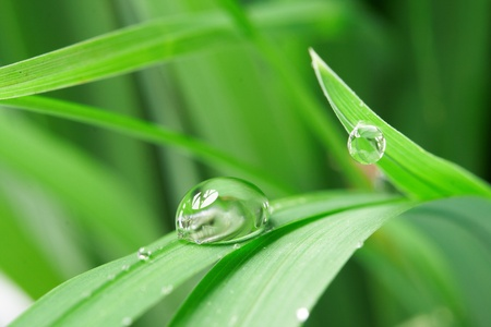 bladeren: druppels met groene gras Stockfoto