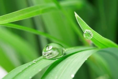 medio ambiente: gotas con hierba verde Foto de archivo