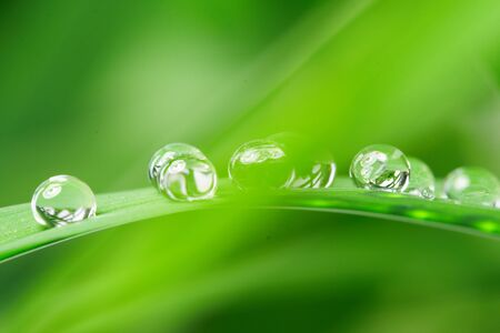 drops with green grass Stock Photo