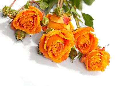 rosas naranjas: Rosas naranjas