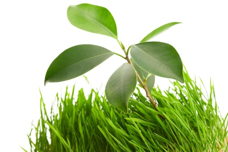 plant in the  grass photo