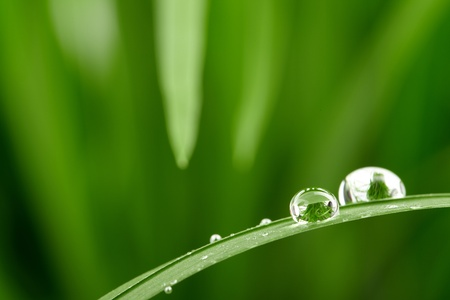 wet leaf: water drops on the green grass