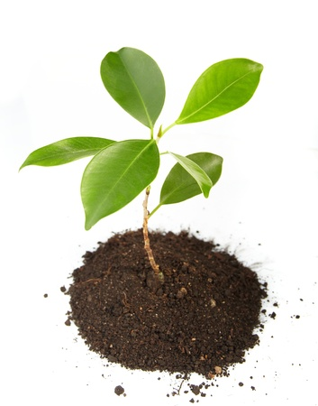 soil pollution: Young green plant on a white background Stock Photo