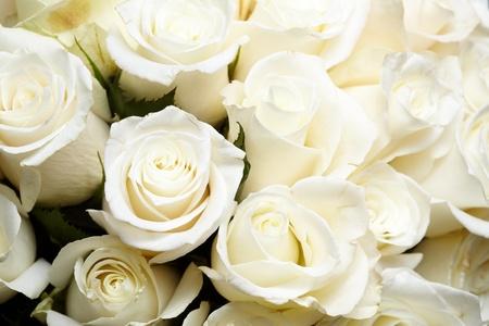 White roses Stock Photo - 9558868