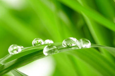 water on leaf: water drops on the green grass