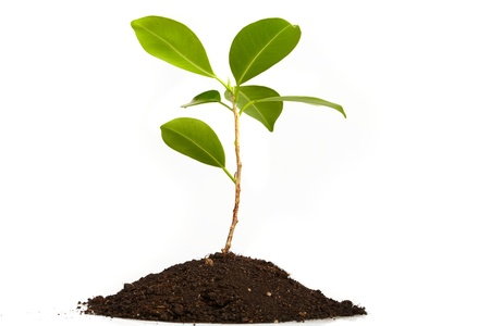thrive: Young green plant on a white background Stock Photo