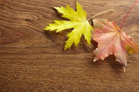 Autumn leaves Stock Photo - 9652871