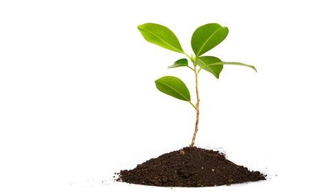 Joven planta verde sobre fondo blanco