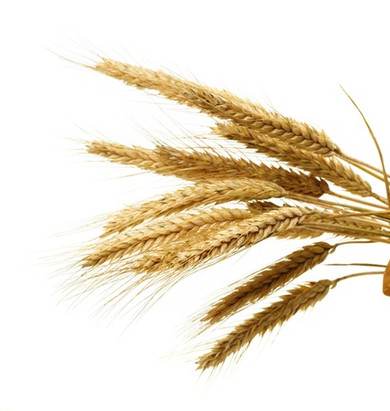 wheat isolated on white Stock Photo - 9761448