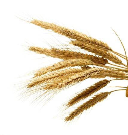 wheat isolated on white Stock Photo - 9761448
