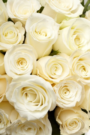 Cream roses Stock Photo - 9762694