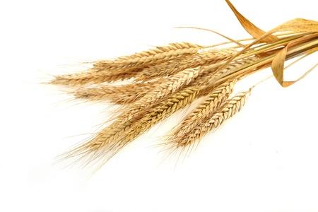 wheat isolated on white Stock Photo - 9948890