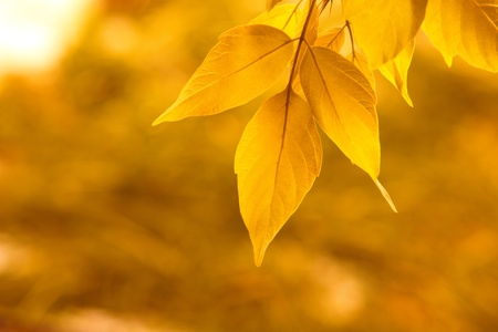 yellow leaves Reklamní fotografie - 11485048