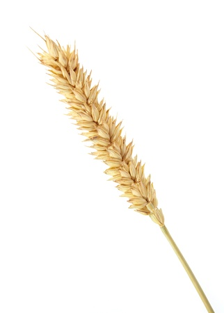 wheat isolated on white Stock Photo - 11485193