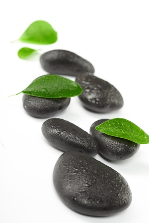 rain japan: black stones and green leaves Stock Photo