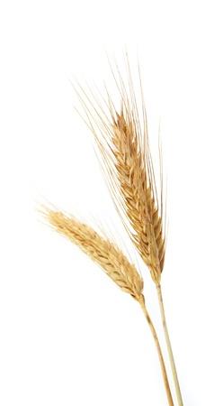 tarwe geïsoleerd op wit  Stockfoto