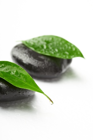 black stones and green leaves photo