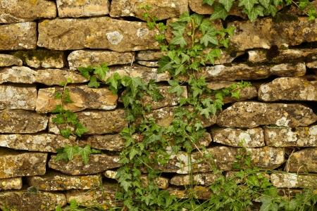 ivies: Muro di pietra e piante verdi Archivio Fotografico