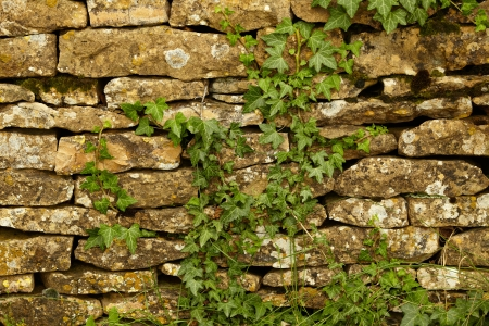 Stone wall and green plants Stock Photo - 14618796
