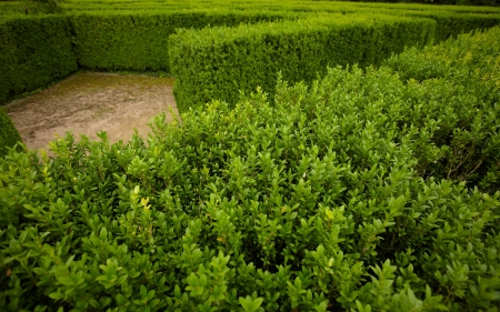 quick hedge: geometric pattern of green hedge flowerbed  Stock Photo