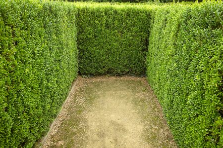 quick hedge: geometric pattern of green hedge flowerbed