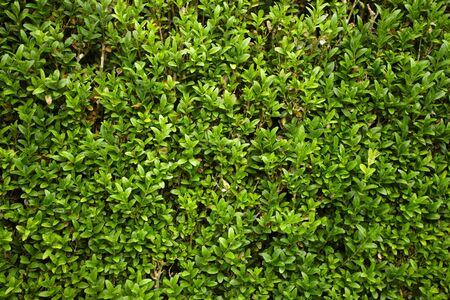 green hedge flowerbed photo