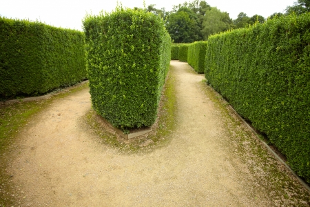 get in shape: geometric pattern of green hedge flowerbed