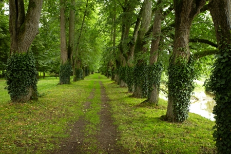 hedgerow: beautiful park