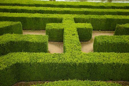 geometric pattern of green hedge flowerbed photo