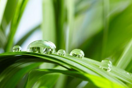 water druppels op het groene gras