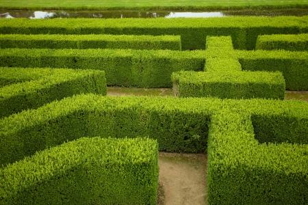 doolhof: geometrisch patroon van groene haag bloembed