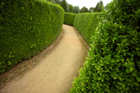 hedge plant: geometric pattern of green hedge flowerbed