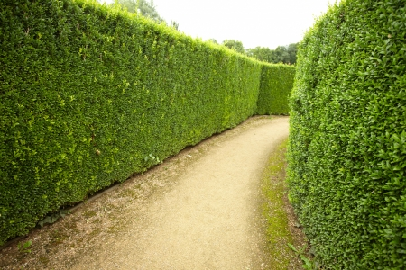 geometric pattern of green hedge flowerbed
