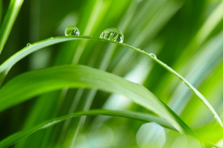 Wassertropfen auf dem grünen Rasen Standard-Bild - 15272964