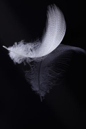 white feather: White feather Stock Photo