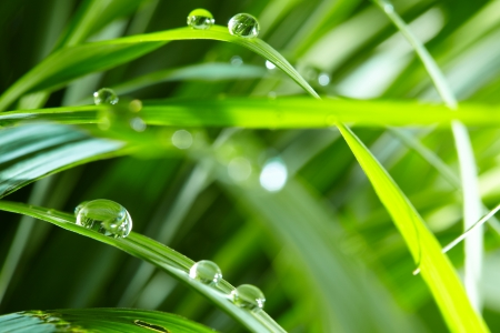 dewdrops: water drops on the green grass