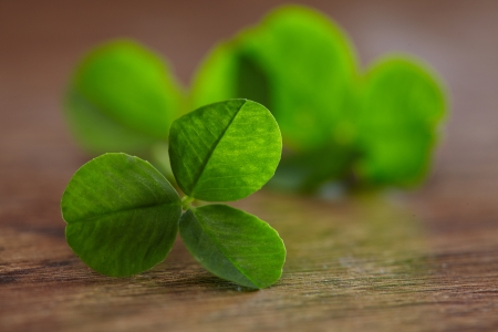 leaf clover on wood background photo