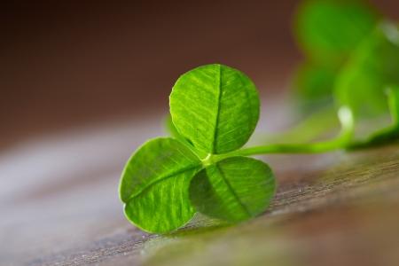 leaf clover on wood background Stock Photo - 16290365