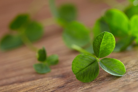 leaf clover on wood background Stock Photo - 16725355